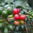 コーヒー定期便/サブスクリプション シングルオリジンコース