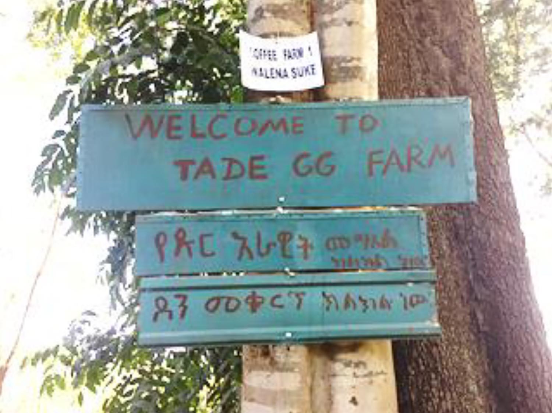 Ethiopia(エチオピア)/Shakisso TadeGG Honey(シャキソ・タデGG・ハニー)