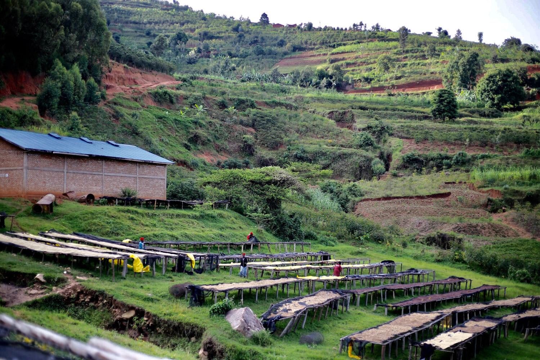 Rwanda(ルワンダ)/Remera Washed(レメラ・ウォッシュド)