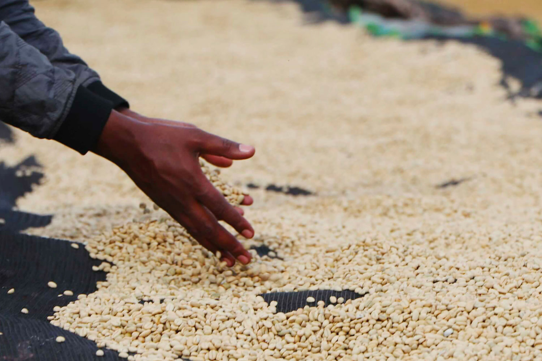 Ethiopia(エチオピア)/Foge Washed(フォゲ・ウォッシュド)