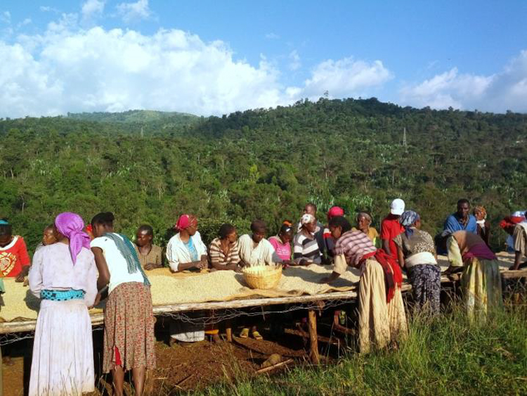 Ethiopia(エチオピア)/Konga Washed(コンガ・ウォッシュド)