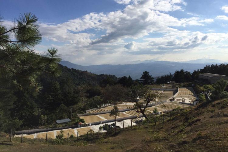 Guatemala/El Guatalon(グアテマラ/エル・グアタロン)