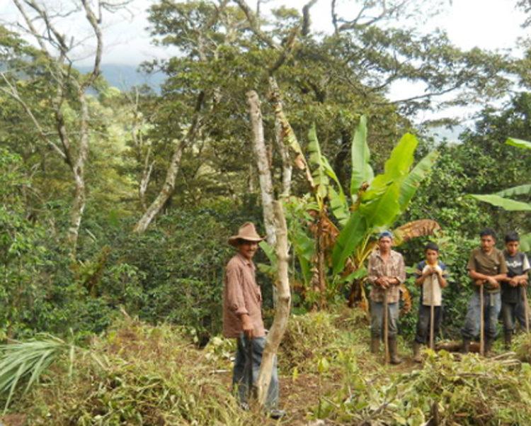 Honduras/La Sabana(ホンジュラス/ラ・サバナ)