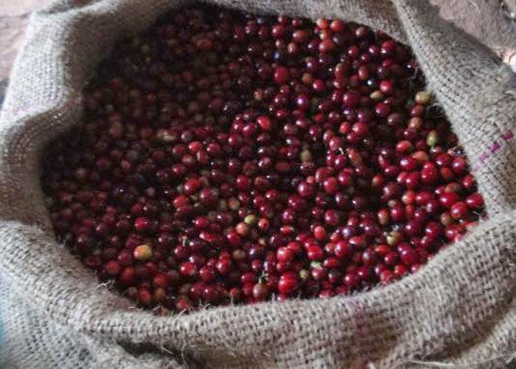 Ethiopia/Konga Washed(エチオピア/コンガ・ウォッシュド)