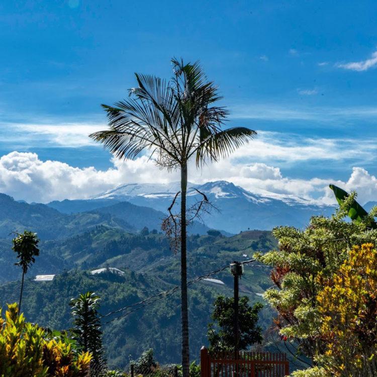 Colombia/Villamaria Natural(コロンビア/ビリャマリア・ナチュラル)